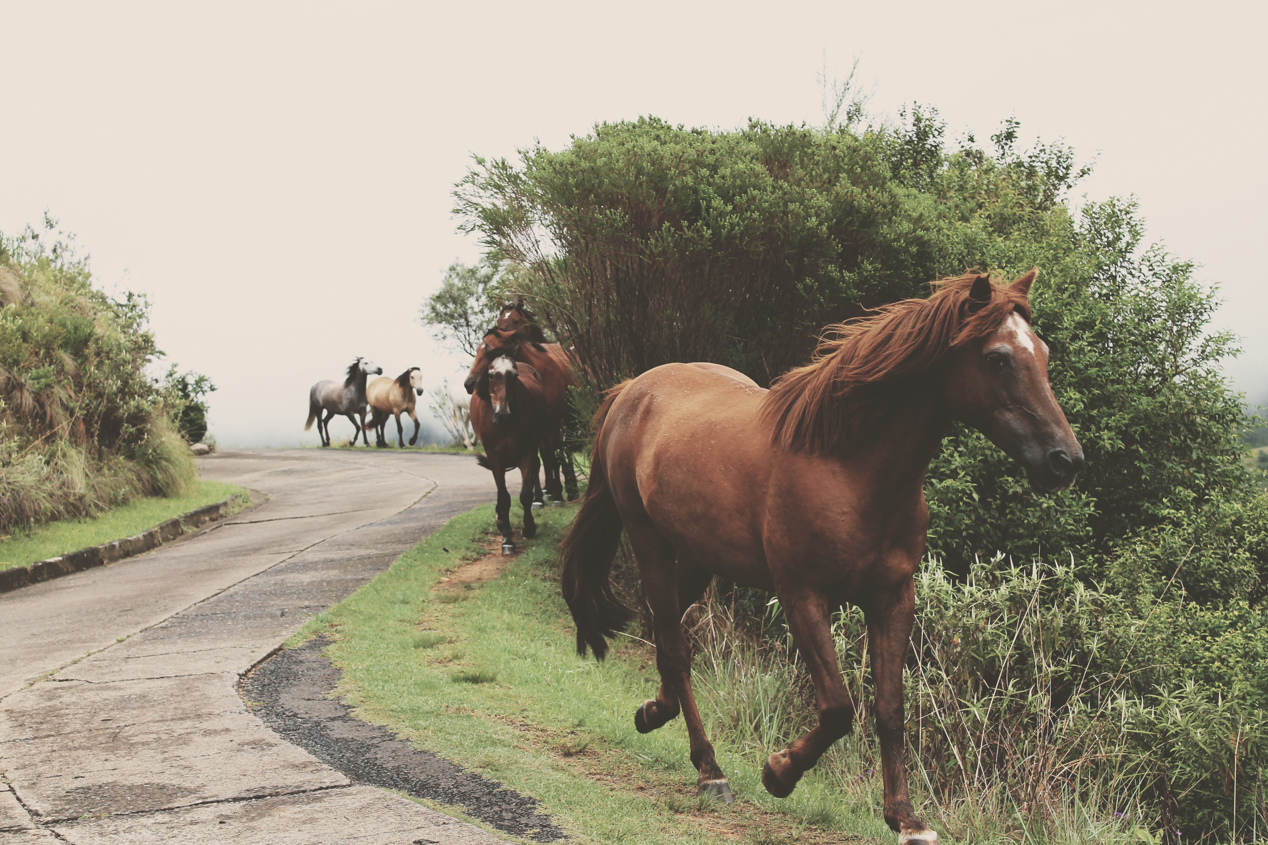 El andar de los caballos – Liebre de Fuego